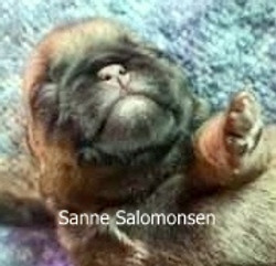 Sanne Salomonsen 1 uge