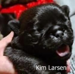Kim Larsen 9 dage