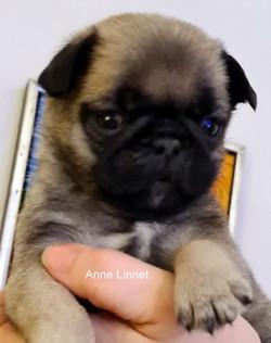 ANNE LINNET SOLGT