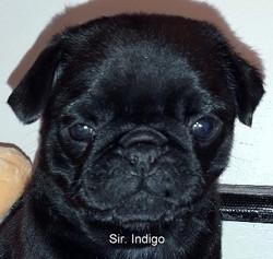 SIR INDIGO SOLGT