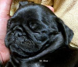 Mr. BLUE SOLGT