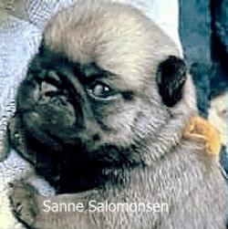 Sanne Salomonsen SOLGT