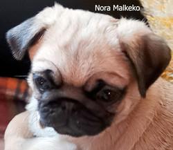 NORA MALKEKO