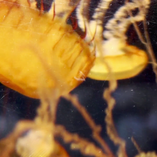 Plankton video