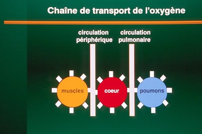 TRANSPORT OXYGENE.jpg