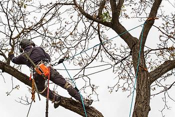 Climber-Ribble Valley- Tree Surgeon.jpg