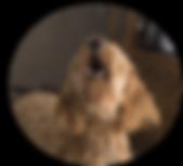 doodle-barking-2965983_1280.png