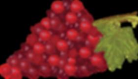 drawn purple grapes graphic