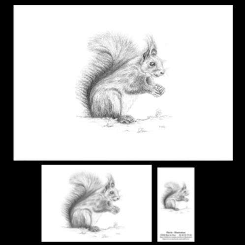 """Trio animalier"" reproduction A4 + carte postale + marque-page"