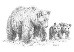 Desin famille ours