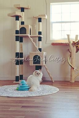 big cattery.jpg