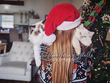 christmas kitty.png