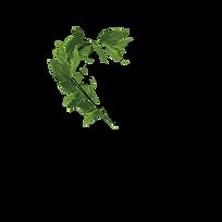 logo_Bothanica_Mineral_CMYK_Prancheta 1.