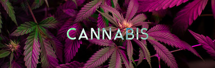 THEMIX_web_HEADER_cannabis_1900x600.jpg