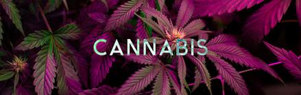 THEMIX_web_HEADER_cannabis_1900x600.jpg