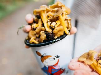 Tiesitkö nämä suomalaisten sienten terveysvaikutukset? / Visste du hur hälsosamma våra svampar är?