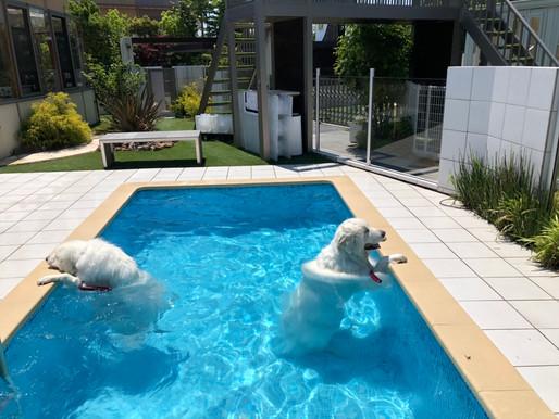 プール利用始まっています 岐阜 各務原 庭遊館