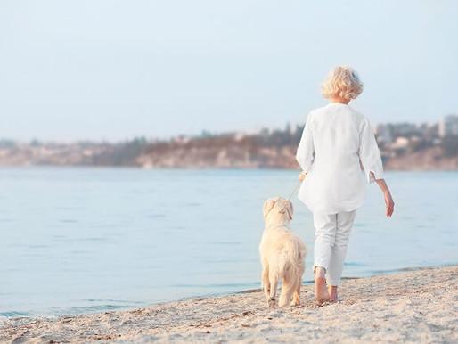 ワンちゃんの高齢化対策