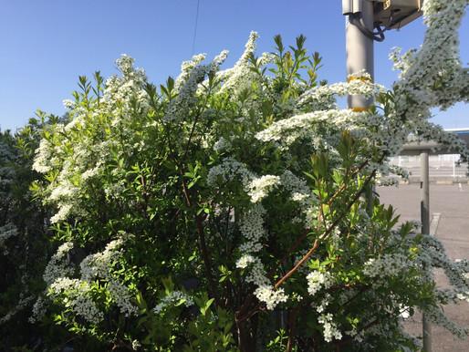 庭に植える樹木について