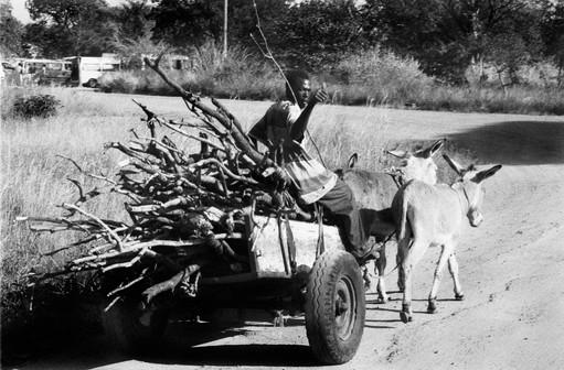 11_homem na carroca.jpg