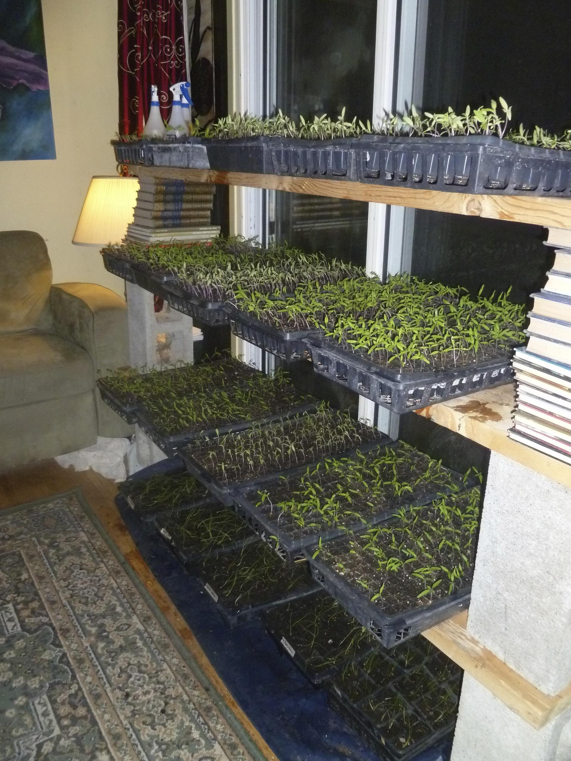 Seedlings start life in the house