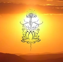 Lotus born - Sunset