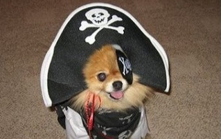 Cão pirata