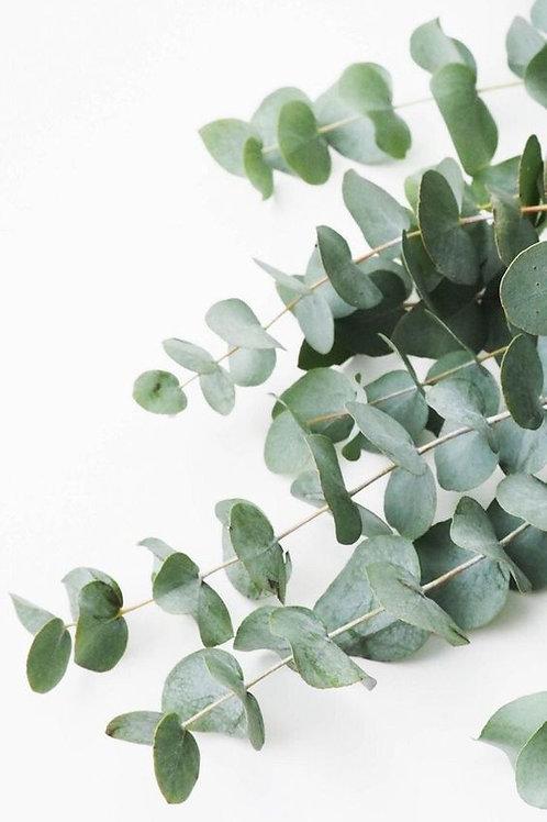 Fresh Eucalyptus Bundle - Pre-Order PICK-UP Trilogy Coffee
