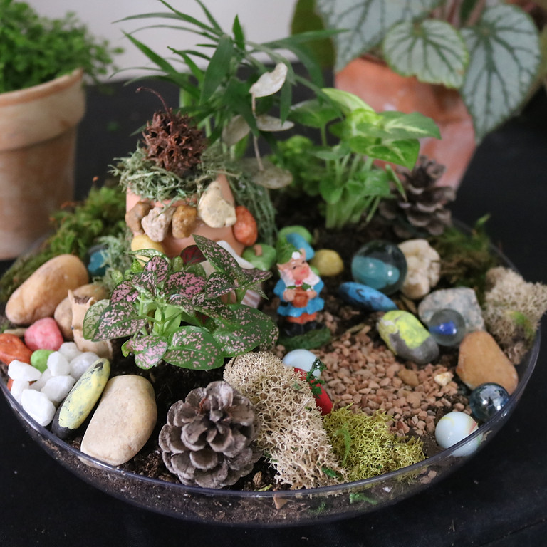 Kids Miniature Fairy Dish Garden - Virtual learning