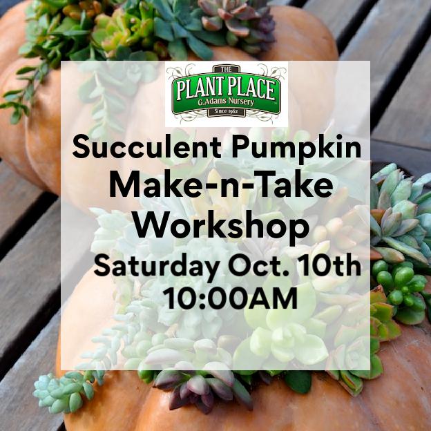 Succulent Pumpkin - Make-N-Take Oct 10th
