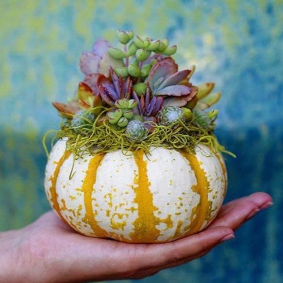 Succulent Pumpkin - Kids Workshop
