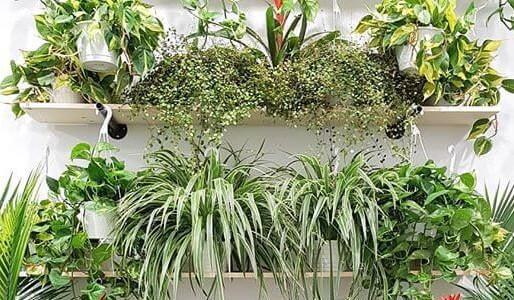 Plant! a Downtown gem