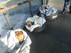 Cães dormindo em caminhas de pneus em Curitiba