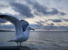 Gaivotas podem voar? Reflexões do livro Fernão Capelo Gaivota