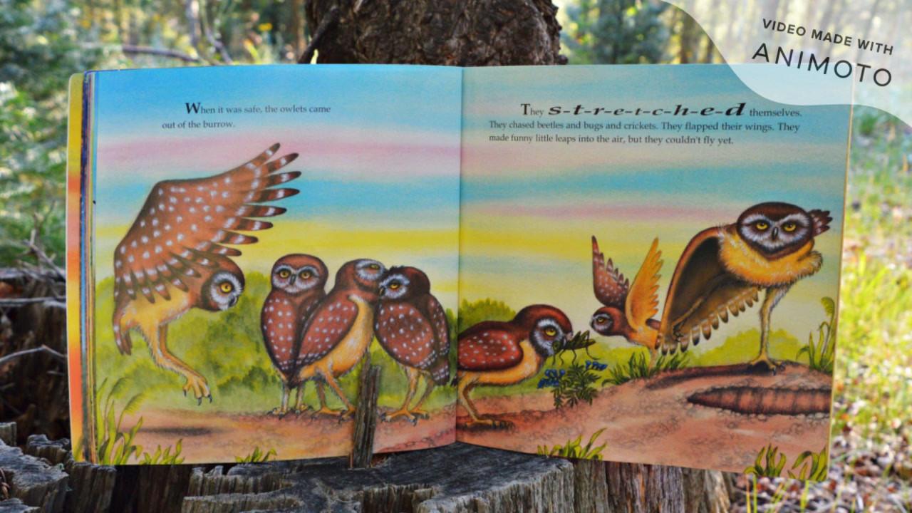 LETMN Reads My Little Book of Burrowing Owls