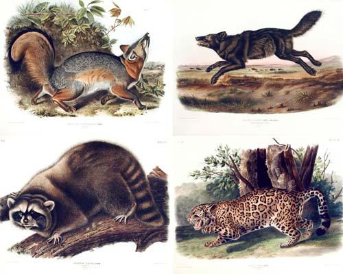 Audubon's Quadrupeds