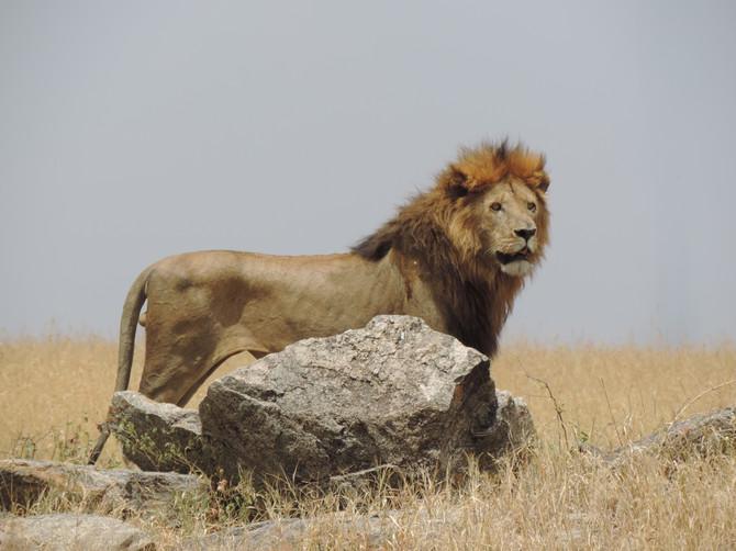 Fighting Poverty Ridden Poaching