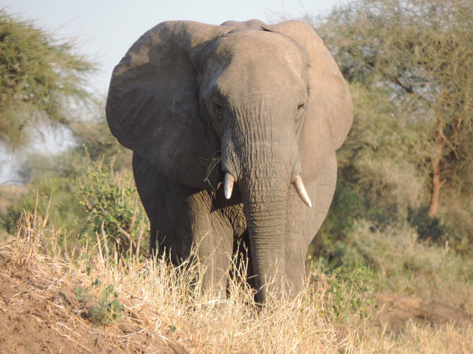 Humanitarianism and African Wildlife Conservation