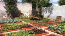 Horta Coletiva: o início