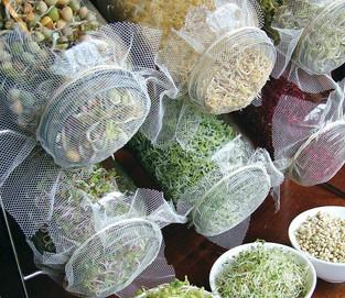 Cultive em casa e consuma mais brotos comestíveis