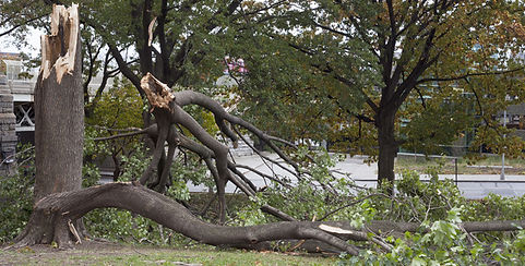 A & K Services of Iowa - Storm Cleanup