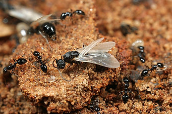 A & K Services of Iowa - Ant Control