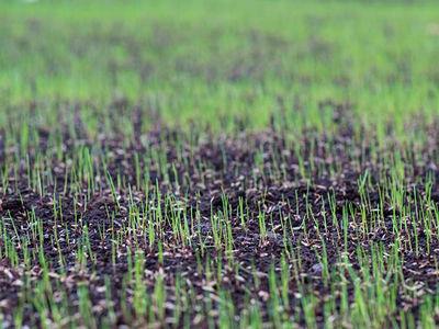 A & K Services of Iowa - Lawn Seeding Programs