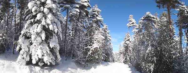 forêt11.jpg