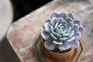 Tabel Plant