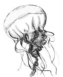 jellyfish_1_edited.jpg