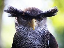 Owl-Board.jpg