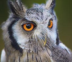 owl-1705112_1920_edited_edited.jpg