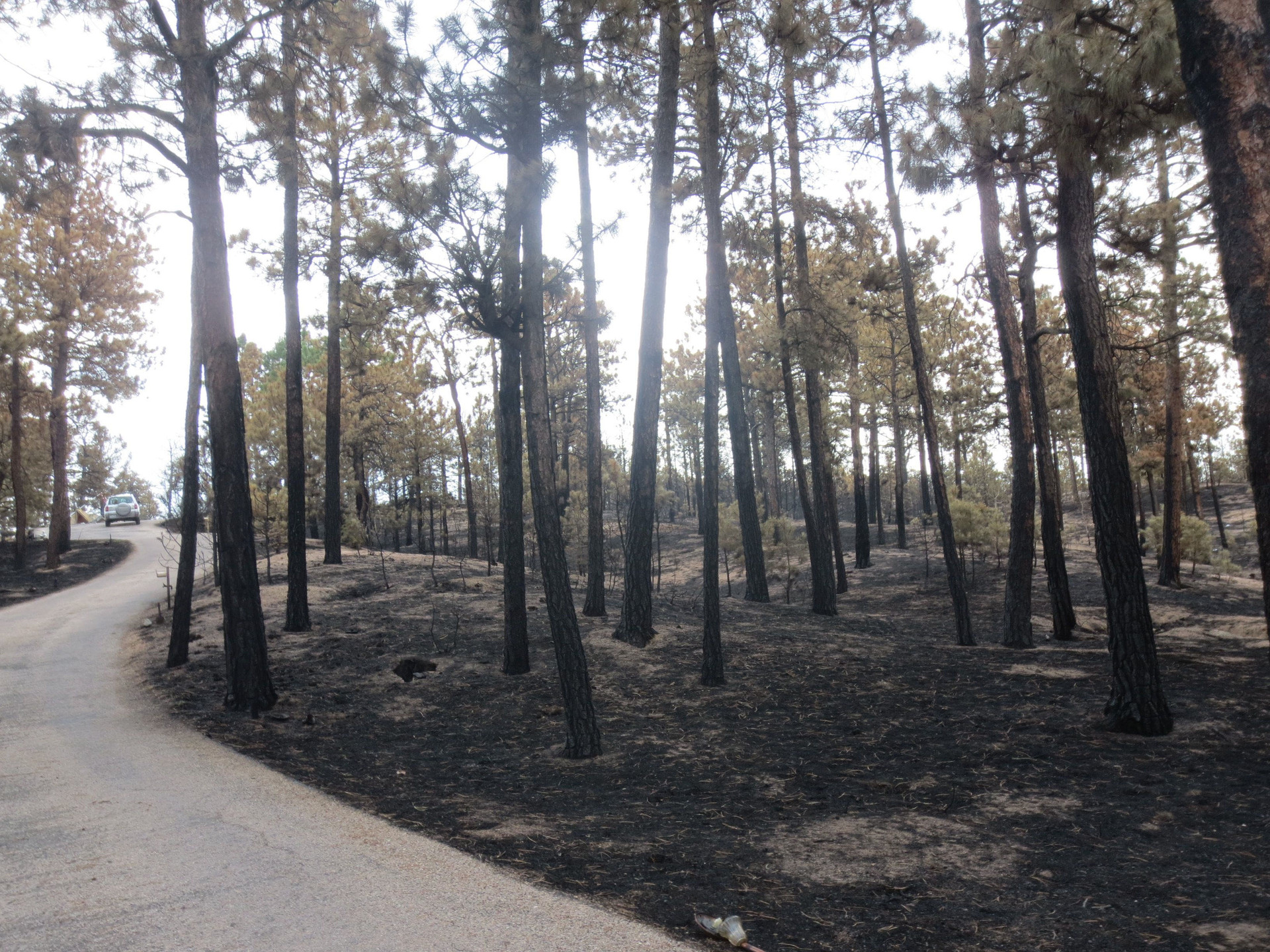 The front yard. This shows the extent of the fire damage.
