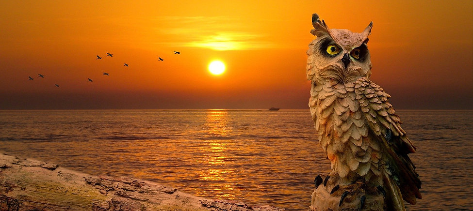 Owl-sunset.jpg